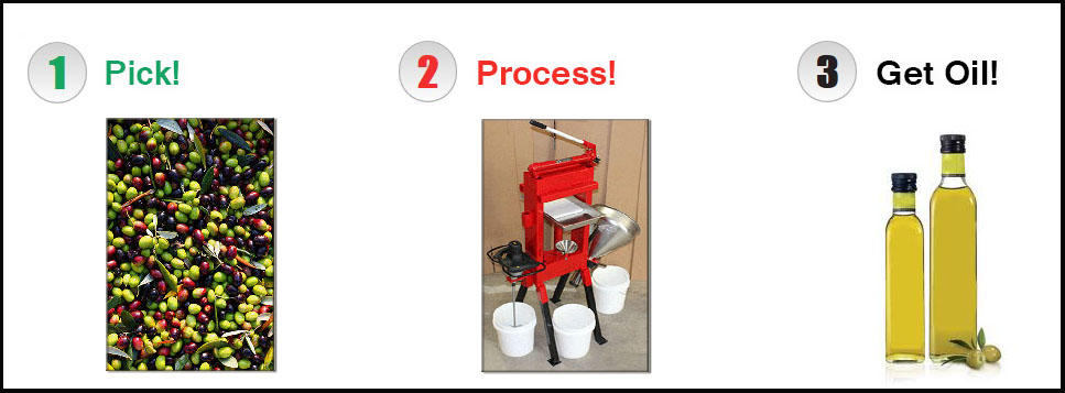 olive oil press precessing mill small do it yourself at home.